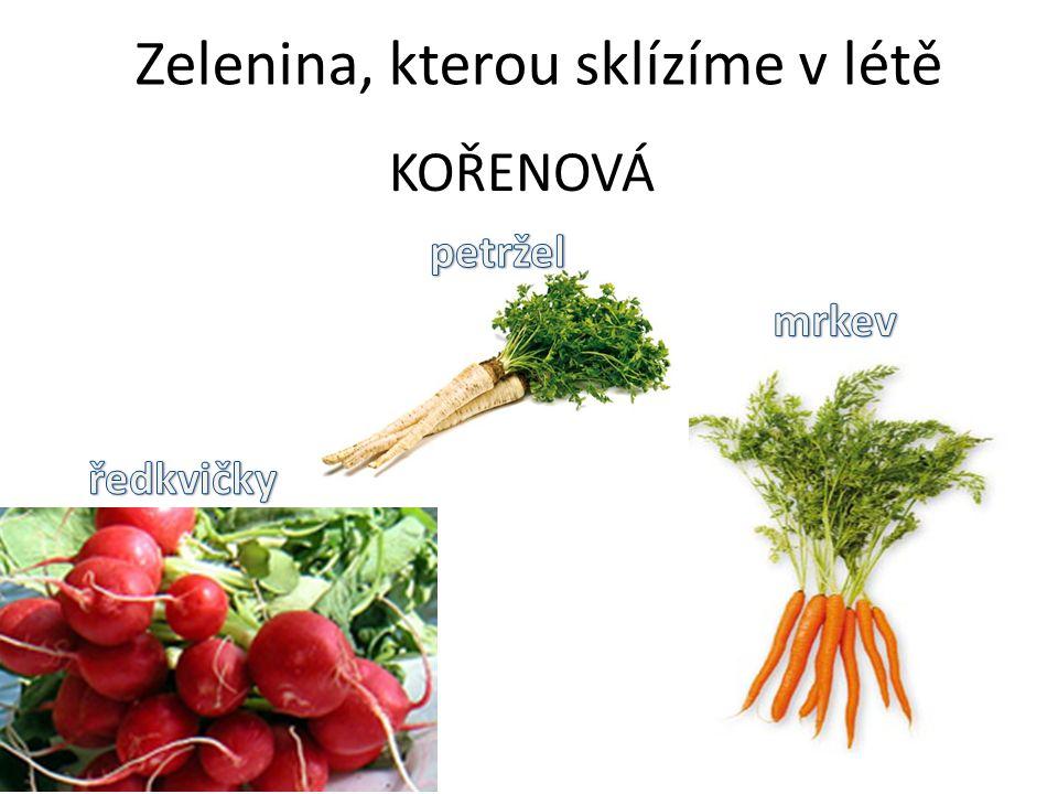 Zelenina, kterou sklízíme v létě KOŘENOVÁ