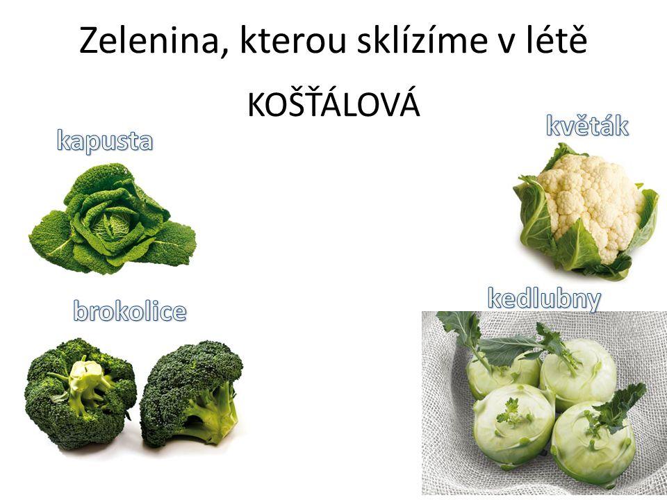 Zelenina, kterou sklízíme v létě KOŠŤÁLOVÁ