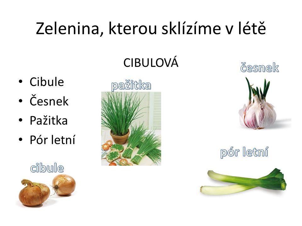 Zelenina, kterou sklízíme v létě CIBULOVÁ Cibule Česnek Pažitka Pór letní