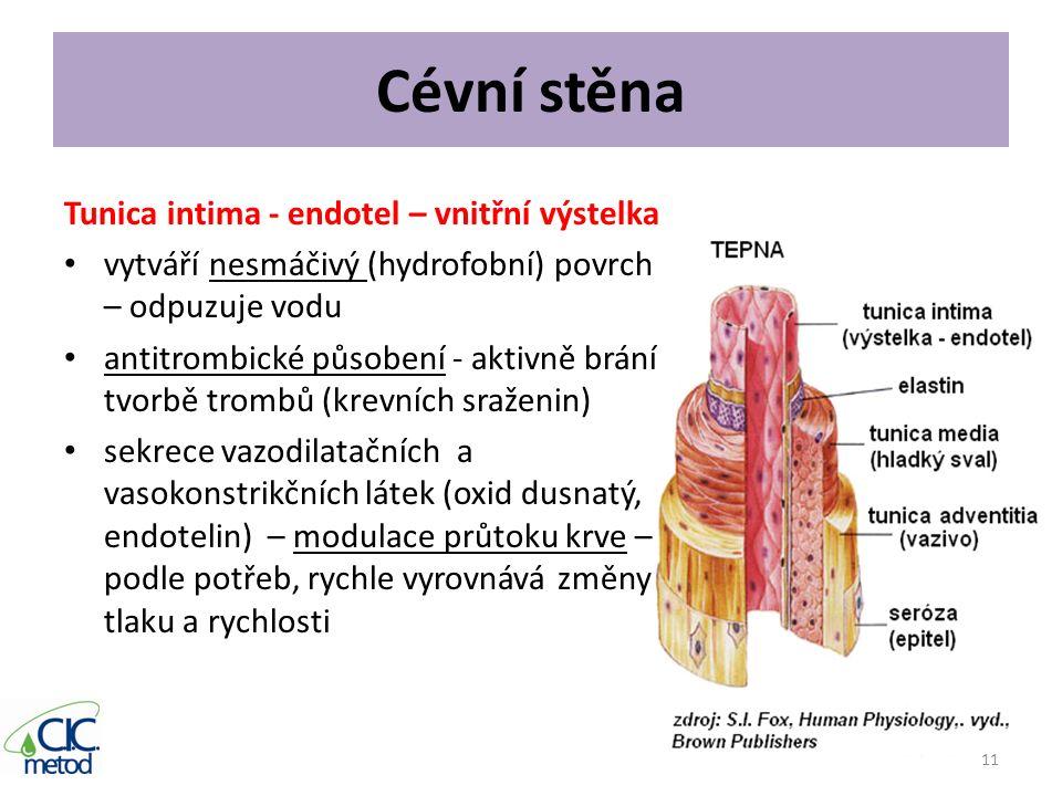 Cévní stěna Tunica intima - endotel – vnitřní výstelka vytváří nesmáčivý (hydrofobní) povrch – odpuzuje vodu antitrombické působení - aktivně brání tv