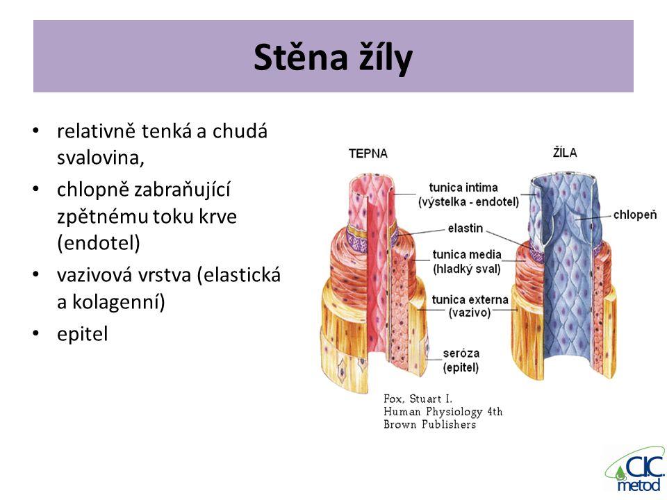 Stěna žíly relativně tenká a chudá svalovina, chlopně zabraňující zpětnému toku krve (endotel) vazivová vrstva (elastická a kolagenní) epitel 26