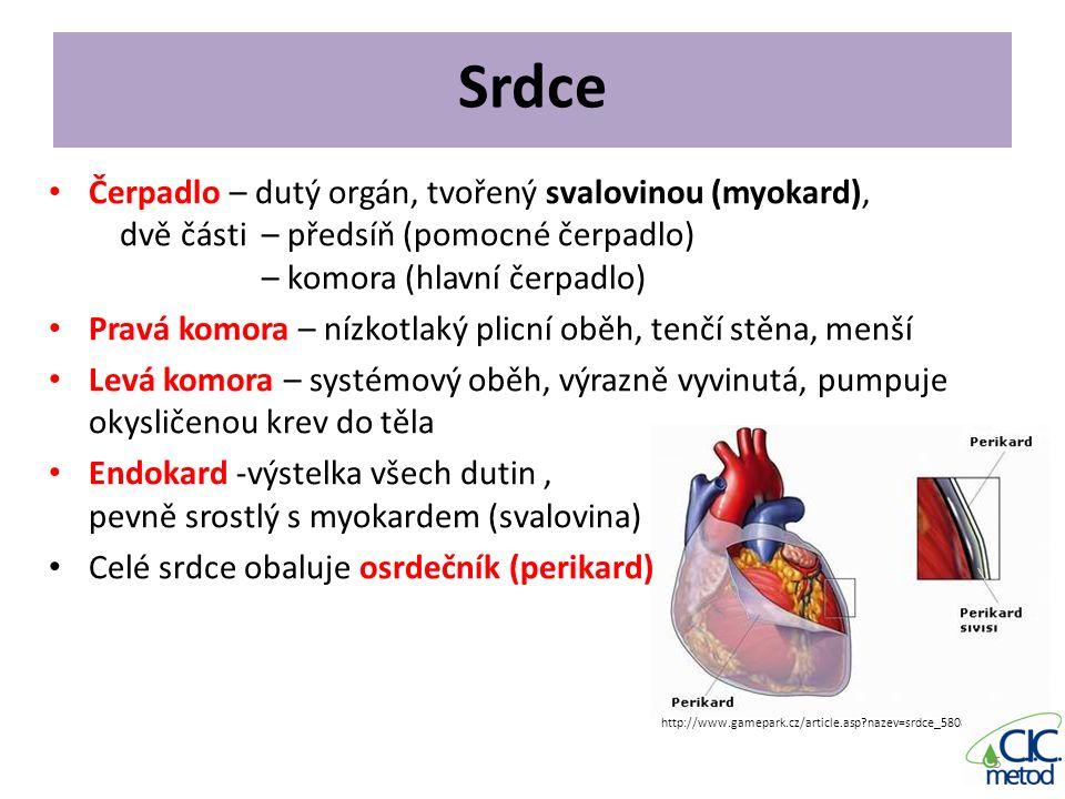 Srdce Čerpadlo – dutý orgán, tvořený svalovinou (myokard), dvě části – předsíň (pomocné čerpadlo) – komora (hlavní čerpadlo) Pravá komora – nízkotlaký