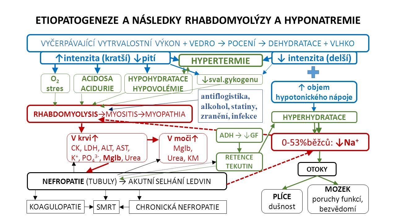 ETIOPATOGENEZE A NÁSLEDKY RHABDOMYOLÝZY A HYPONATREMIE VYČERPÁVAJÍCÍ VYTRVALOSTNÍ VÝKON + VEDRO → POCENÍ → DEHYDRATACE + VLHKO HYPOHYDRATACE HYPOVOLÉMIE ↑ objem hypotonického nápoje NEFROPATIE (TUBULY) → AKUTNÍ SELHÁNÍ LEDVIN 0-53%běžců: ↓Na + RHABDOMYOLYSIS→MYOSITIS→MYOPATHIA V krvi↑ CK, LDH, ALT, AST, K +, PO 4 3-, Mglb, Urea ACIDOSA ACIDURIE KOAGULOPATIE CHRONICKÁ NEFROPATIE MOZEK poruchy funkcí, bezvědomí SMRT antiflogistika, alkohol, statiny, zranění, infekce ↓ intenzita (delší) ↑intenzita (kratší) ↓pití O 2 stres HYPERTERMIE HYPERHYDRATACE V moči↑ Mglb, Urea, KM ↓sval.gykogenu ADH → ↓GF RETENCE TEKUTIN OTOKY PLÍCE dušnost