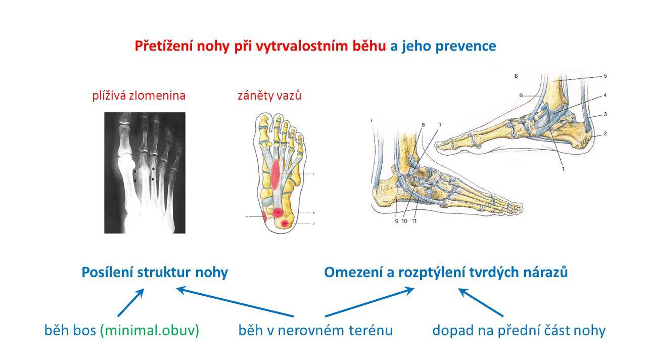 Přetížení nohy při vytrvalostním běhu a jeho prevence plíživá zlomeninazáněty vazů Posílení struktur nohyOmezení a rozptýlení tvrdých nárazů běh bos (minimal.obuv)běh v nerovném terénudopad na přední část nohy