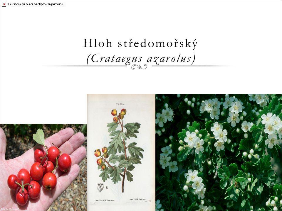 Mandloňovité (Amygdalaceae) ● Opadavé nebo vzácně vždyzelené keře nebo stromy.