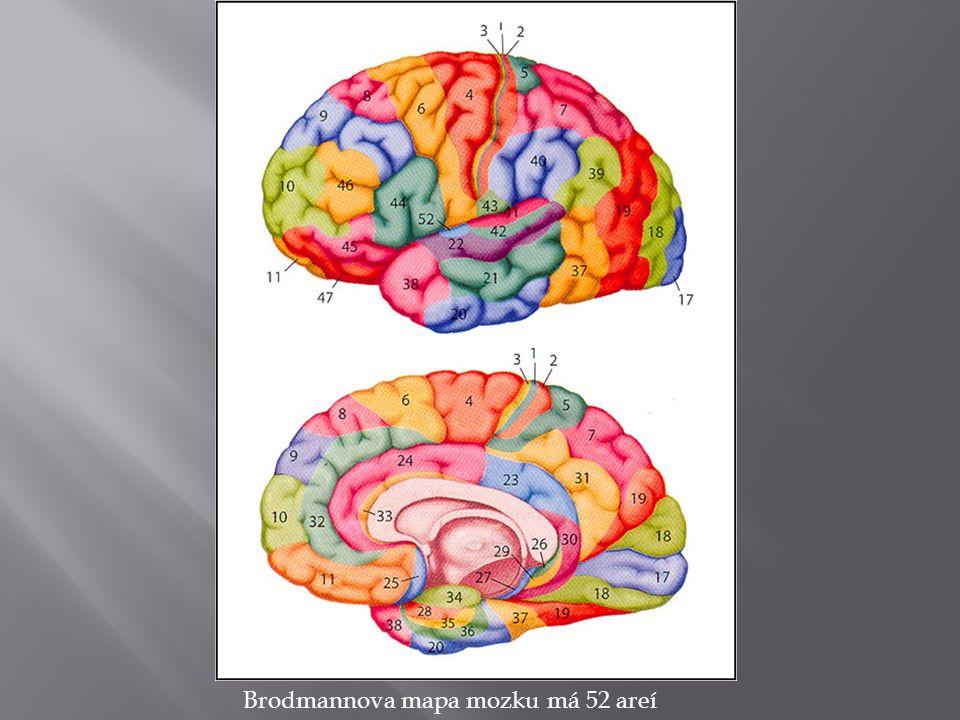 Brodmannova mapa mozku má 52 areí