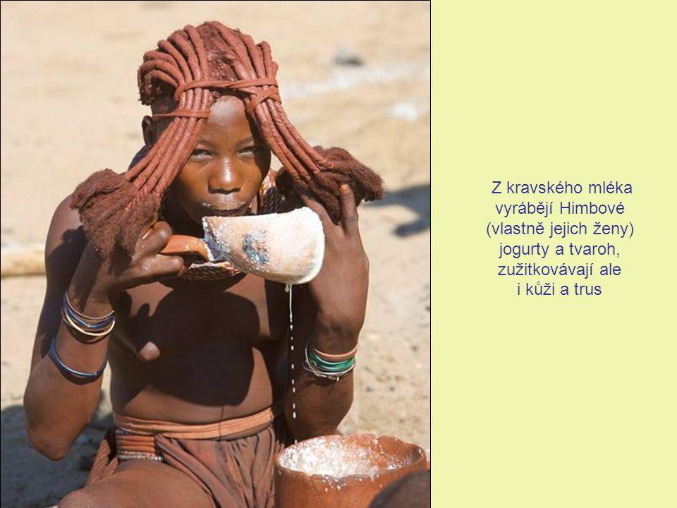Z kravského mléka vyrábějí Himbové (vlastně jejich ženy) jogurty a tvaroh, zužitkovávají ale i kůži a trus