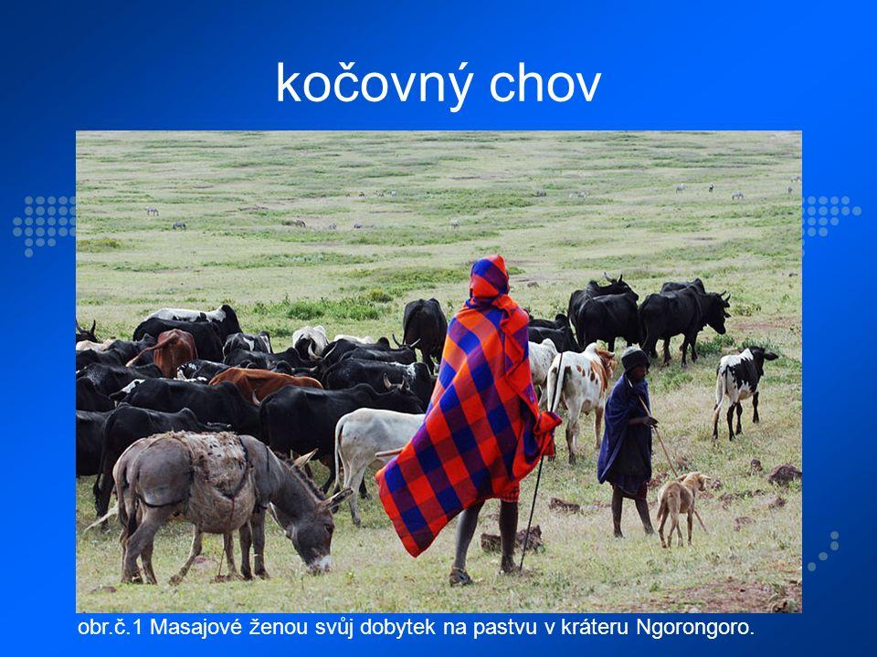 kočovný chov obr.č.1 Masajové ženou svůj dobytek na pastvu v kráteru Ngorongoro.