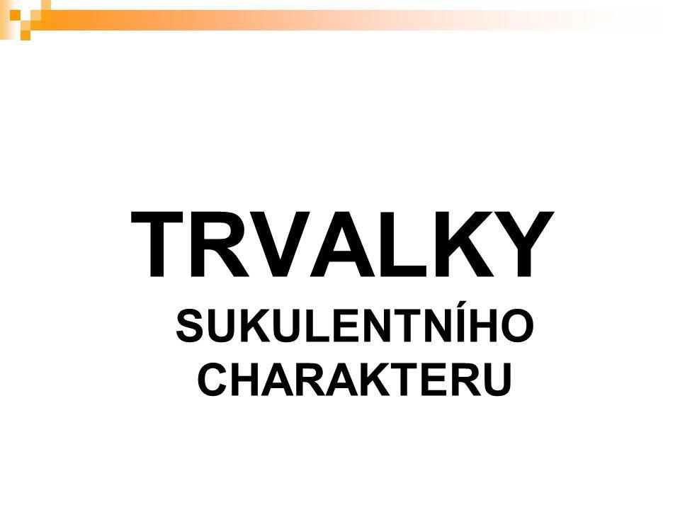 TRVALKY SUKULENTNÍHO CHARAKTERU
