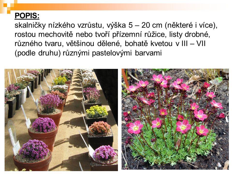 POPIS: skalničky nízkého vzrůstu, výška 5 – 20 cm (některé i více), rostou mechovitě nebo tvoří přízemní růžice, listy drobné, různého tvaru, většinou dělené, bohatě kvetou v III – VII (podle druhu) různými pastelovými barvami