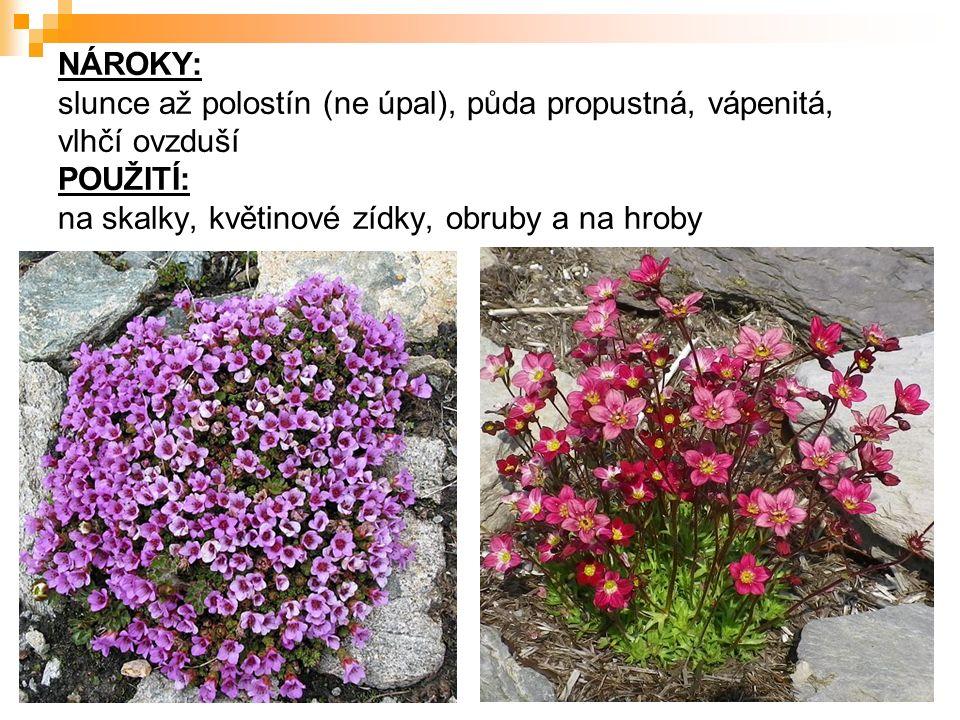 ZDROJE Zdroje – literatura  VÍT, J.a kol. Květinářství.