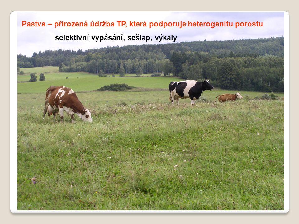 Pastva – přirozená údržba TP, která podporuje heterogenitu porostu selektivní vypásání, sešlap, výkaly