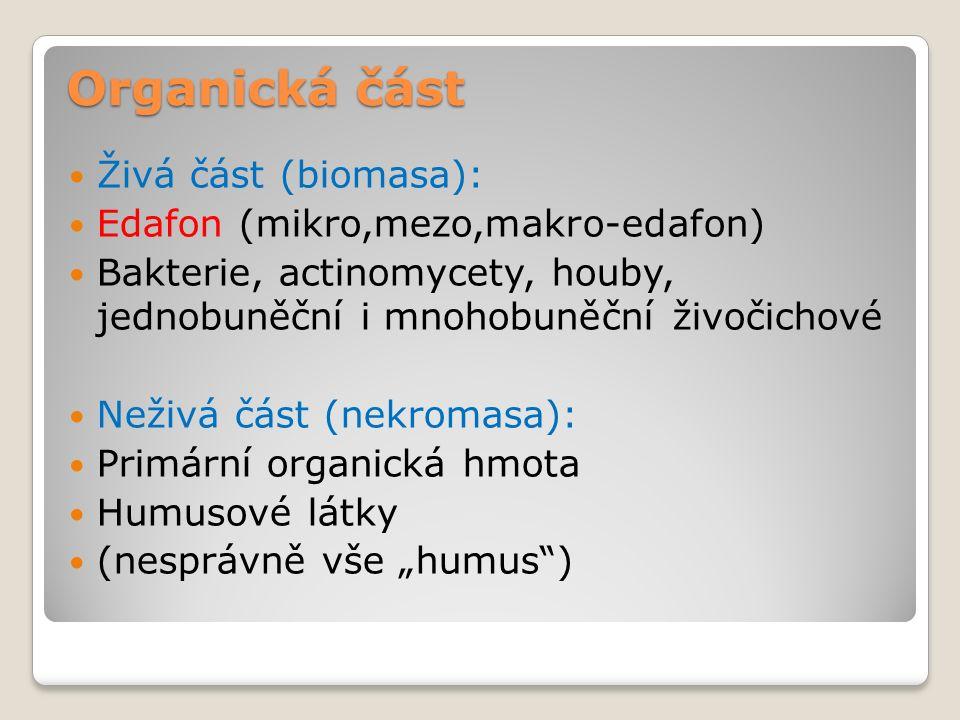 """Organická část Živá část (biomasa): Edafon (mikro,mezo,makro-edafon) Bakterie, actinomycety, houby, jednobuněční i mnohobuněční živočichové Neživá část (nekromasa): Primární organická hmota Humusové látky (nesprávně vše """"humus )"""