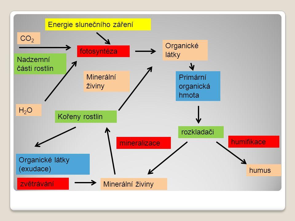 Nadzemní části rostlin Kořeny rostlin CO 2 H2OH2O rozkladači Primární organická hmota Organické látky (exudace) Minerální živiny Energie slunečního záření fotosyntéza Organické látky mineralizace humifikace humus Minerální živiny zvětrávání