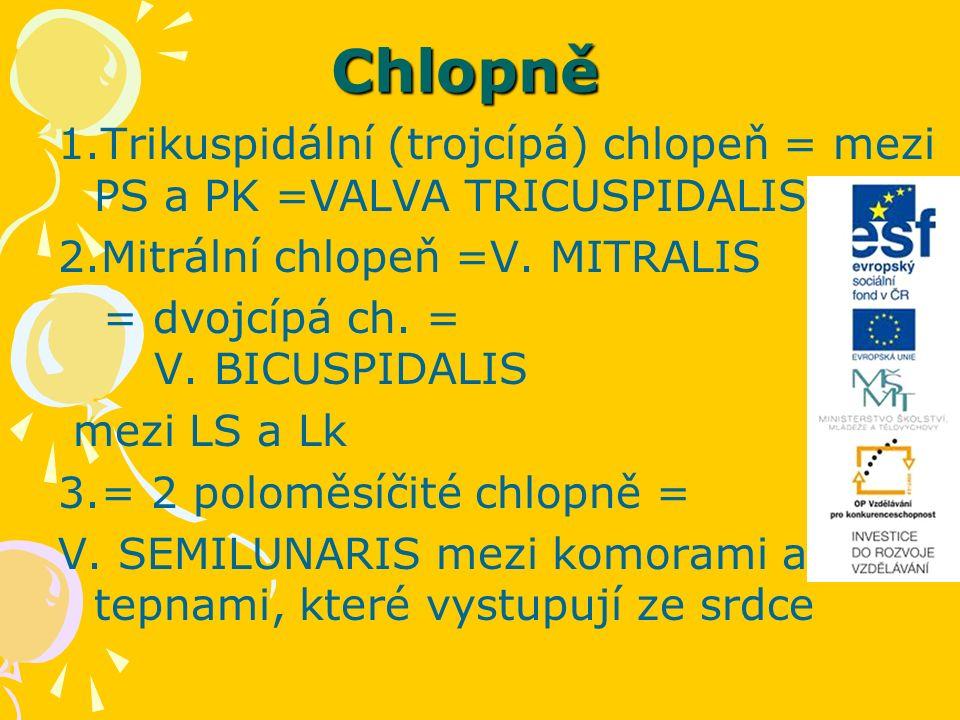 Chlopně 1.Trikuspidální (trojcípá) chlopeň = mezi PS a PK =VALVA TRICUSPIDALIS 2.Mitrální chlopeň =V.