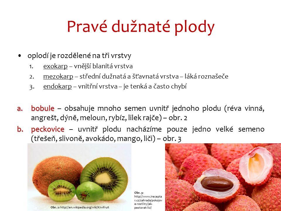 Pravé dužnaté plody oplodí je rozdělené na tři vrstvy 1.exokarp – vnější blanitá vrstva 2.mezokarp – střední dužnatá a šťavnatá vrstva – láká roznašeče 3.endokarp – vnitřní vrstva – je tenká a často chybí a.bobule a.bobule – obsahuje mnoho semen uvnitř jednoho plodu (réva vinná, angrešt, dýně, meloun, rybíz, lilek rajče) – obr.