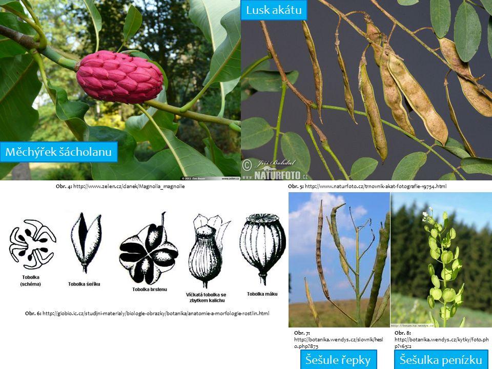 Obr. 4: http://www.zelen.cz/clanek/Magnolia_magnolie Obr.