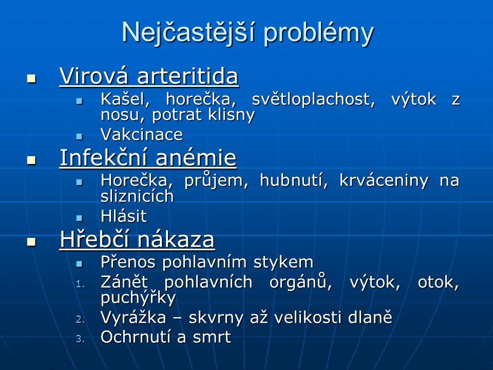 Nejčastější problémy Virová arteritida Virová arteritida Kašel, horečka, světloplachost, výtok z nosu, potrat klisny Kašel, horečka, světloplachost, v