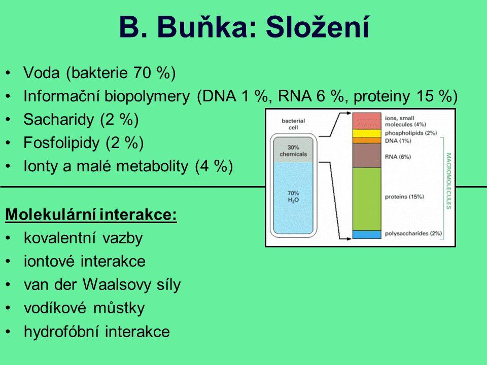 B. Buňka: Složení Voda (bakterie 70 %) Informační biopolymery (DNA 1 %, RNA 6 %, proteiny 15 %) Sacharidy (2 %) Fosfolipidy (2 %) Ionty a malé metabol