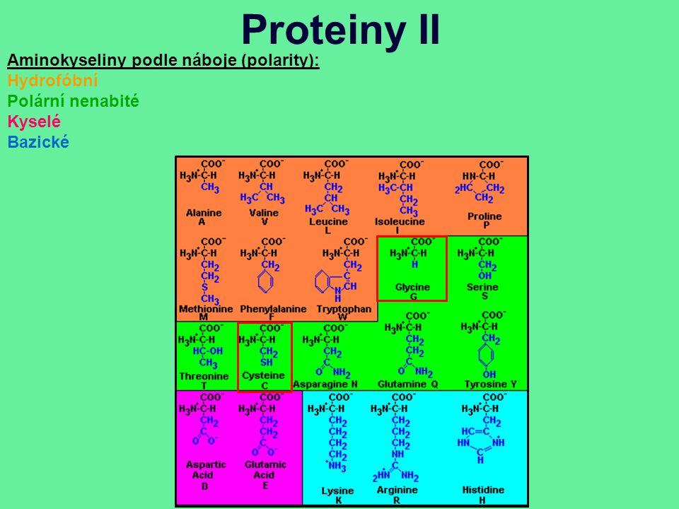Proteiny II Aminokyseliny podle náboje (polarity): Hydrofóbní Polární nenabité Kyselé Bazické