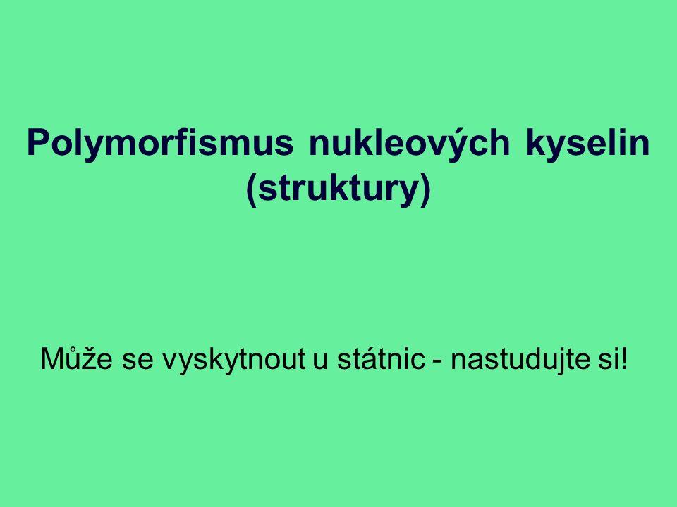 Polymorfismus nukleových kyselin (struktury) Může se vyskytnout u státnic - nastudujte si!