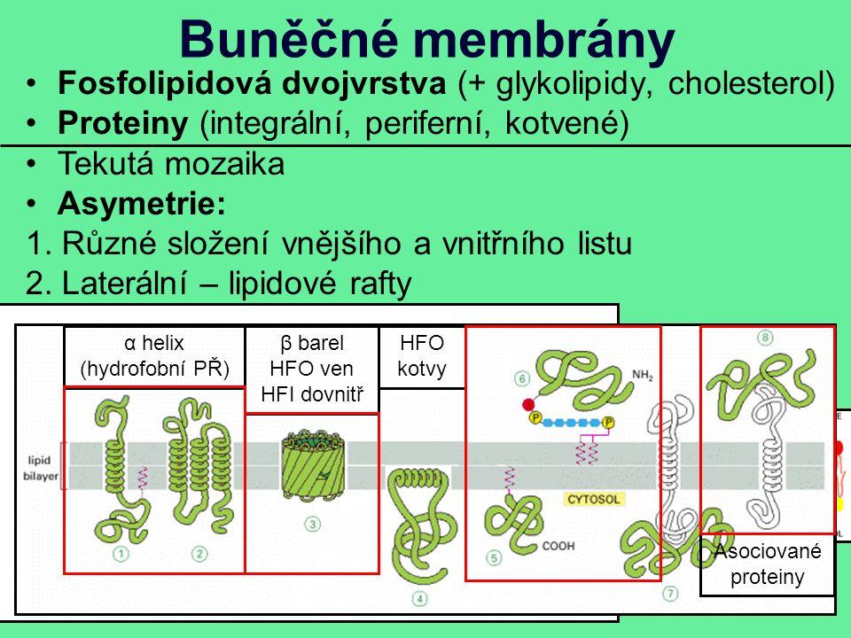 Buněčné membrány Fosfolipidová dvojvrstva (+ glykolipidy, cholesterol) Proteiny (integrální, periferní, kotvené) Tekutá mozaika Asymetrie: 1.