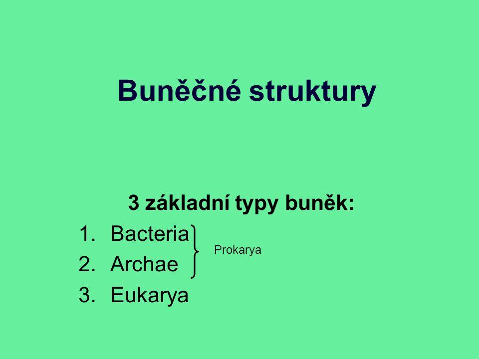 Buněčné struktury 3 základní typy buněk: 1.Bacteria 2.Archae 3.Eukarya Prokarya