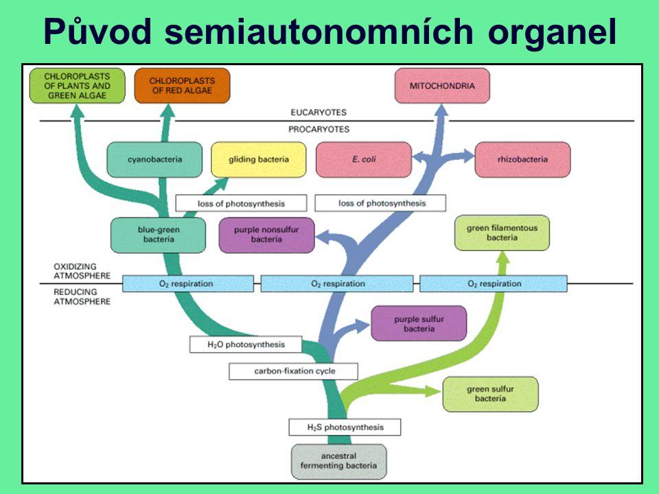 Původ semiautonomních organel