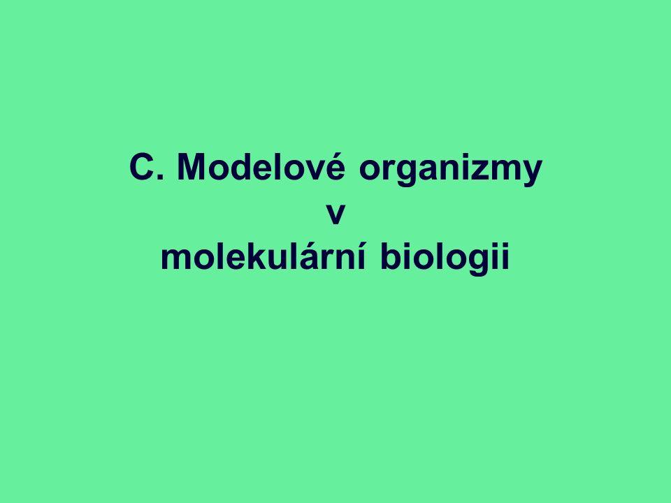 C. Modelové organizmy v molekulární biologii