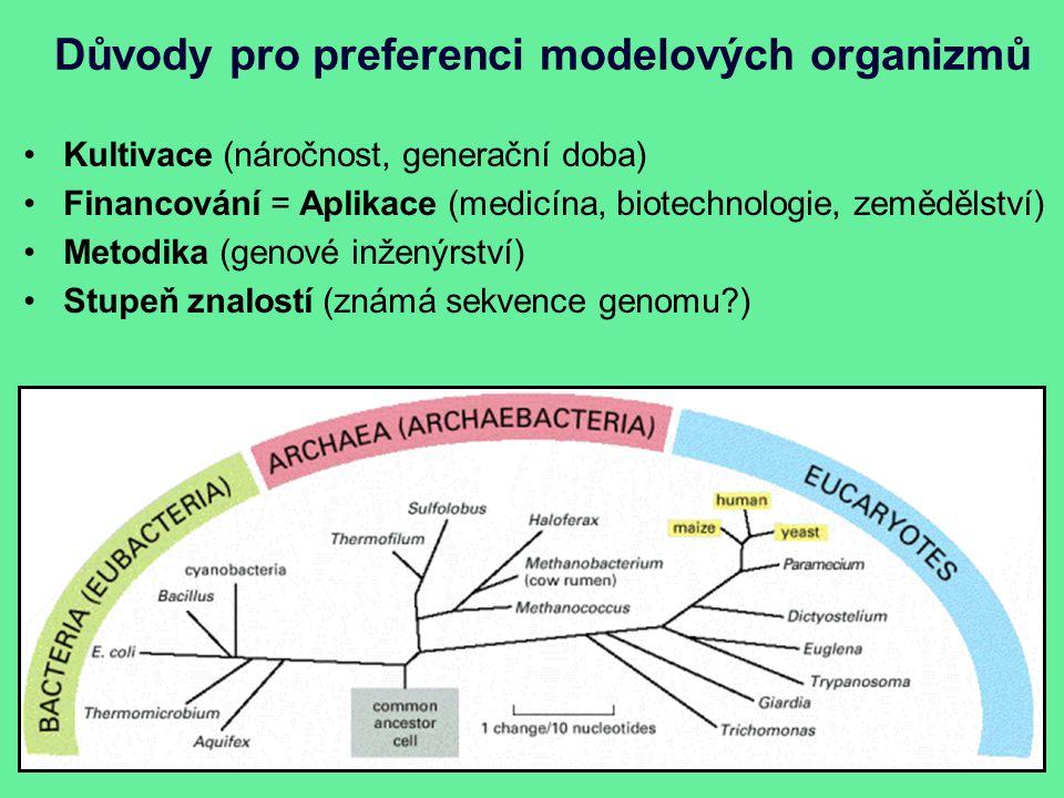 Důvody pro preferenci modelových organizmů Kultivace (náročnost, generační doba) Financování = Aplikace (medicína, biotechnologie, zemědělství) Metodika (genové inženýrství) Stupeň znalostí (známá sekvence genomu?)