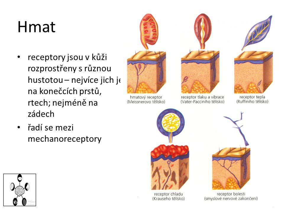 Hmat receptory jsou v kůži rozprostřeny s různou hustotou – nejvíce jich je na konečcích prstů, rtech; nejméně na zádech řadí se mezi mechanoreceptory