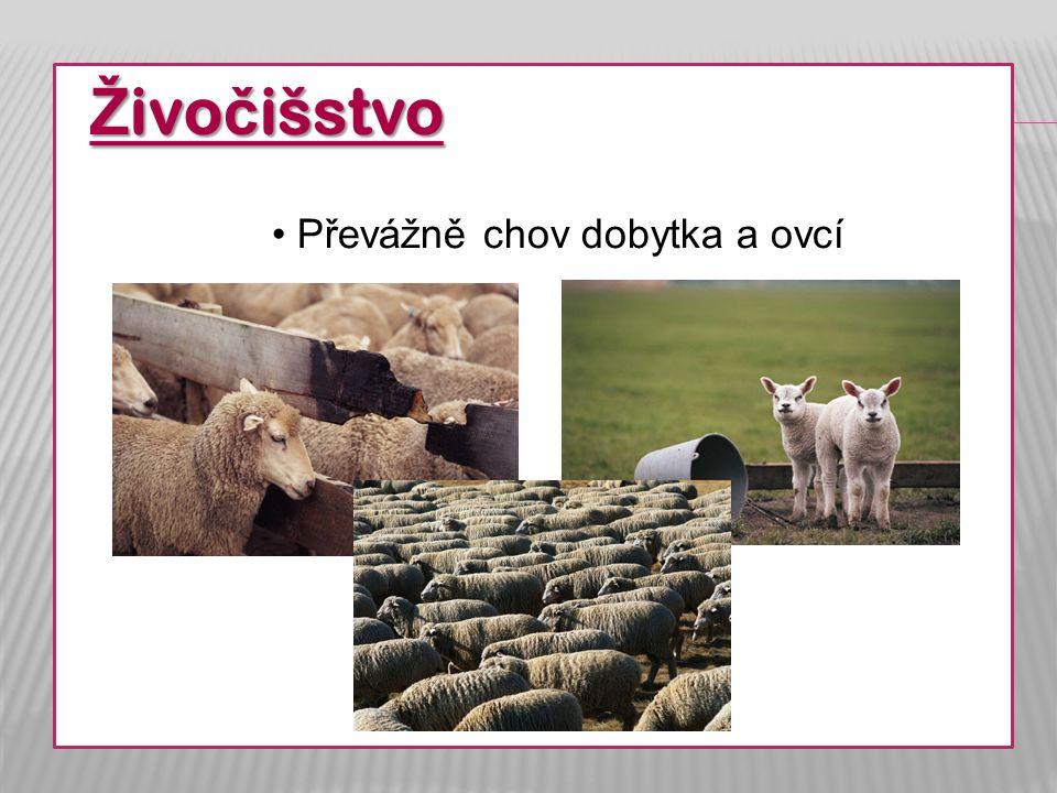 Ž ivo č išstvo Převážně chov dobytka a ovcí