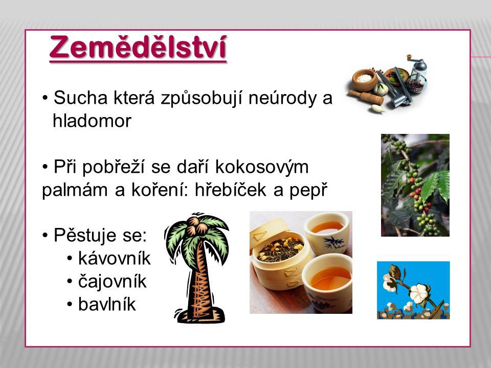 Zem ě d ě lství Sucha která způsobují neúrody a hladomor Při pobřeží se daří kokosovým palmám a koření: hřebíček a pepř Pěstuje se: kávovník čajovník bavlník