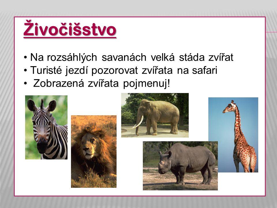 Ž ivo č išstvo Na rozsáhlých savanách velká stáda zvířat Turisté jezdí pozorovat zvířata na safari Zobrazená zvířata pojmenuj!