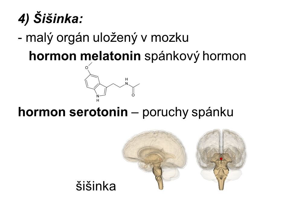 4) Šišinka: - malý orgán uložený v mozku hormon melatonin spánkový hormon hormon serotonin – poruchy spánku šišinka