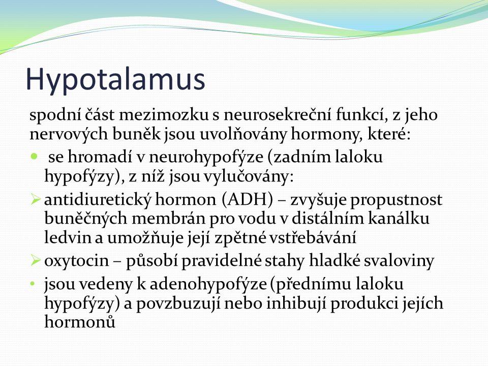Hypotalamus spodní část mezimozku s neurosekreční funkcí, z jeho nervových buněk jsou uvolňovány hormony, které: se hromadí v neurohypofýze (zadním laloku hypofýzy), z níž jsou vylučovány:  antidiuretický hormon (ADH) – zvyšuje propustnost buněčných membrán pro vodu v distálním kanálku ledvin a umožňuje její zpětné vstřebávání  oxytocin – působí pravidelné stahy hladké svaloviny jsou vedeny k adenohypofýze (přednímu laloku hypofýzy) a povzbuzují nebo inhibují produkci jejích hormonů
