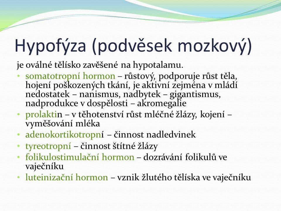 Hypofýza (podvěsek mozkový) je oválné tělísko zavěšené na hypotalamu.