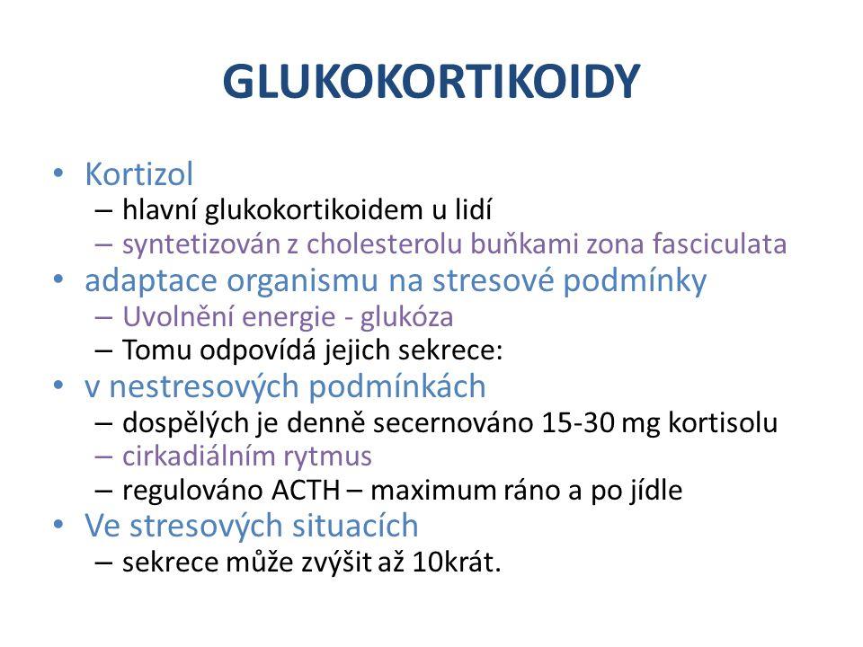 GLUKOKORTIKOIDY Kortizol – hlavní glukokortikoidem u lidí – syntetizován z cholesterolu buňkami zona fasciculata adaptace organismu na stresové podmínky – Uvolnění energie - glukóza – Tomu odpovídá jejich sekrece: v nestresových podmínkách – dospělých je denně secernováno 15-30 mg kortisolu – cirkadiálním rytmus – regulováno ACTH – maximum ráno a po jídle Ve stresových situacích – sekrece může zvýšit až 10krát.
