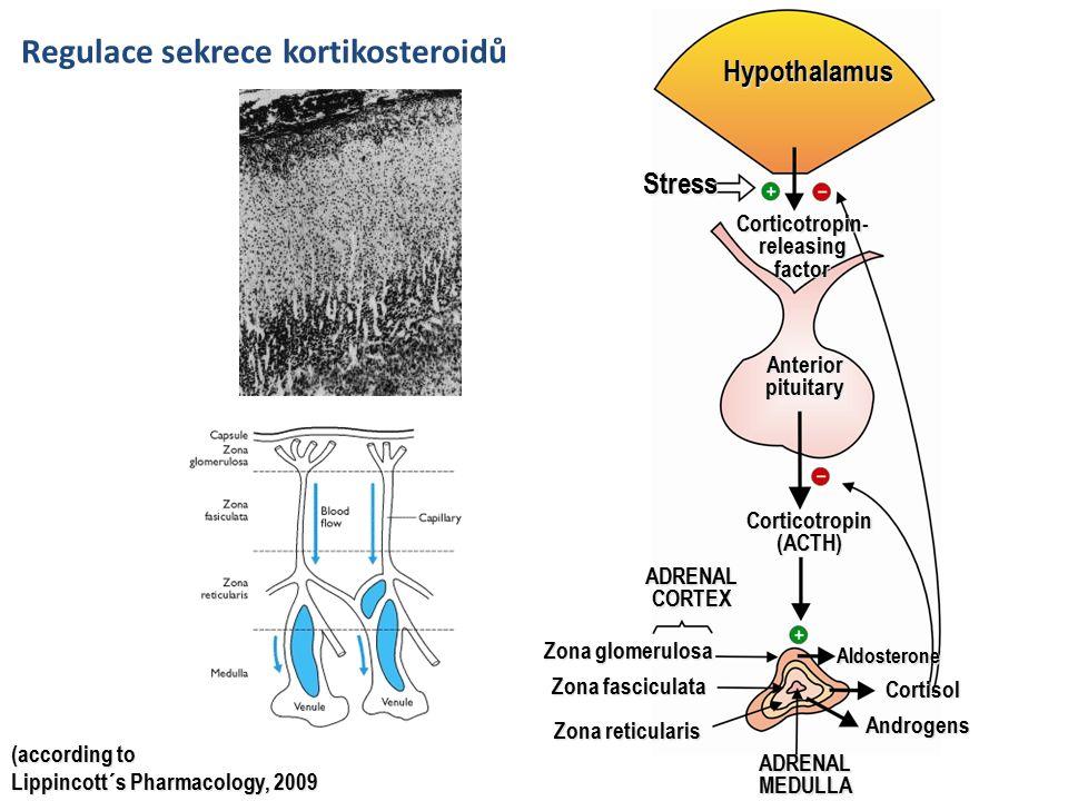 Přehled glukokortikoidů Agonisté – Hydrokortizon, prednizon, prednizolon, metylprednizon, dexametazon Antagonisté – Aminoglutetimid, ketokonazol, metyrapon – Eplerenon, spironolakton