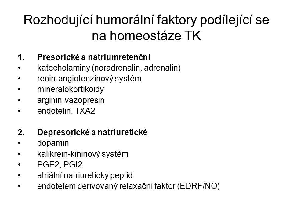 Rozhodující humorální faktory podílející se na homeostáze TK 1.Presorické a natriumretenční katecholaminy (noradrenalin, adrenalin) renin-angiotenzinový systém mineralokortikoidy arginin-vazopresin endotelin, TXA2 2.Depresorické a natriuretické dopamin kalikrein-kininový systém PGE2, PGI2 atriální natriuretický peptid endotelem derivovaný relaxační faktor (EDRF/NO)