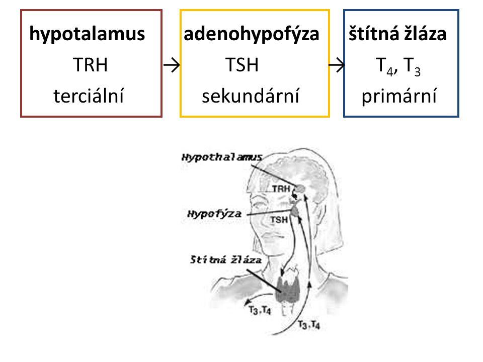 hypotalamus adenohypofýza štítná žláza TRH → TSH → T 4, T 3 terciální sekundární primární