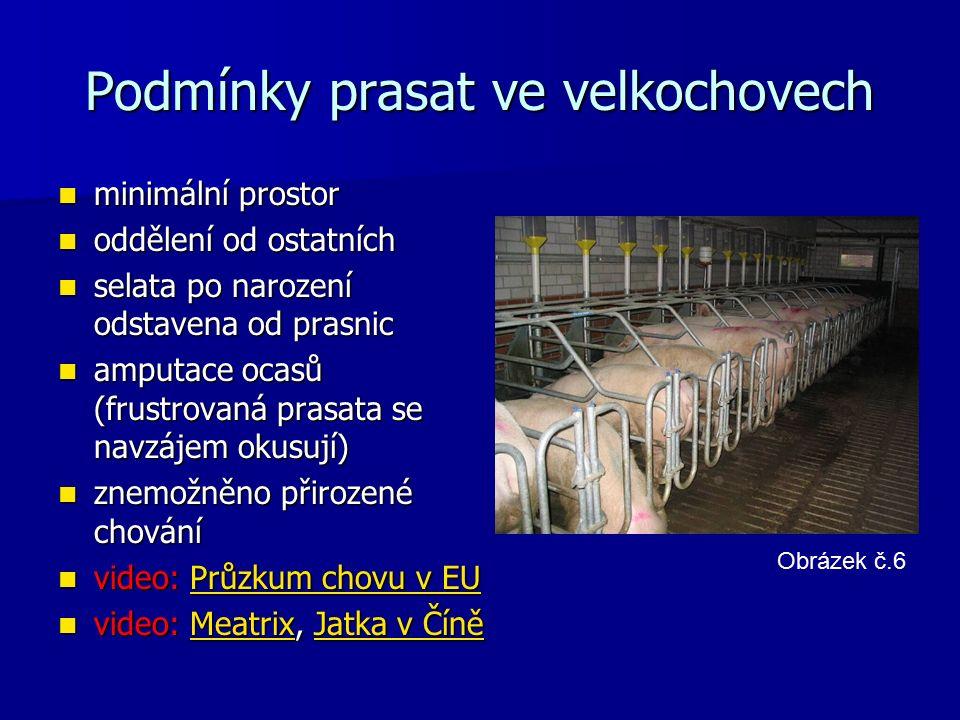 Podmínky prasat ve velkochovech minimální prostor minimální prostor oddělení od ostatních oddělení od ostatních selata po narození odstavena od prasnic selata po narození odstavena od prasnic amputace ocasů (frustrovaná prasata se navzájem okusují) amputace ocasů (frustrovaná prasata se navzájem okusují) znemožněno přirozené chování znemožněno přirozené chování video: Průzkum chovu v EU video: Průzkum chovu v EUPrůzkum chovu v EUPrůzkum chovu v EU video: Meatrix, Jatka v Číně video: Meatrix, Jatka v ČíněMeatrixJatka v ČíněMeatrixJatka v Číně Obrázek č.6