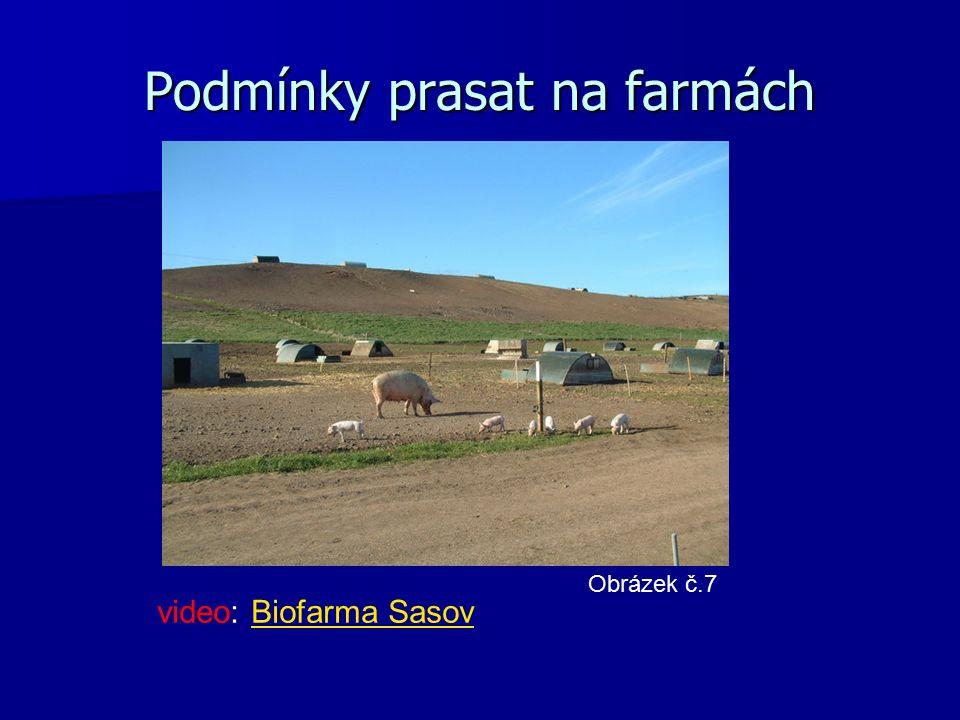 Podmínky prasat na farmách Obrázek č.7 video: Biofarma SasovBiofarma Sasov