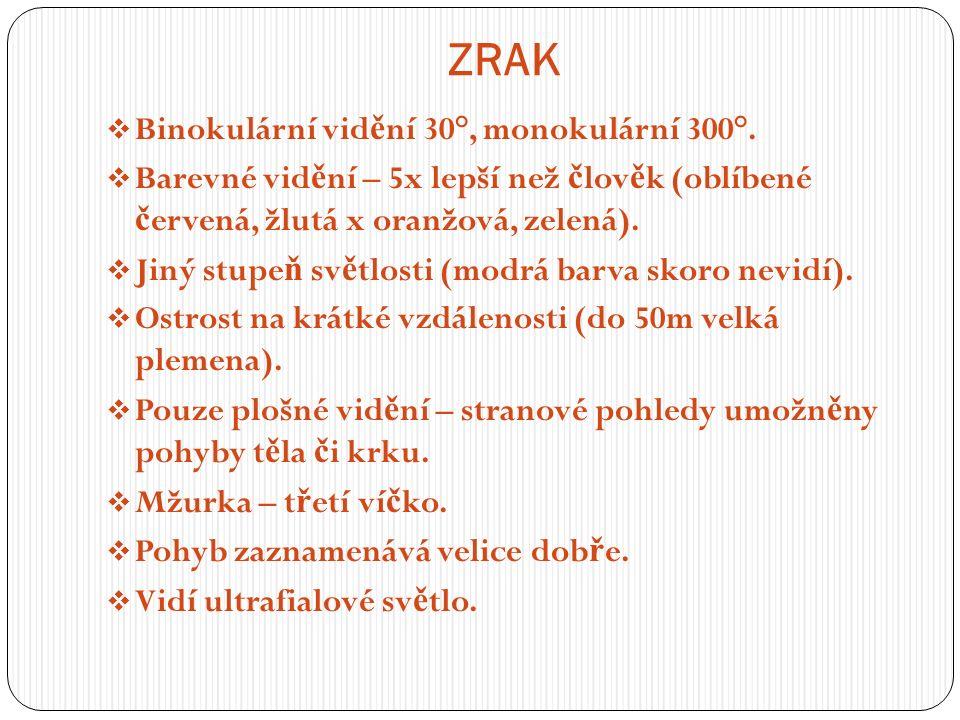 ZRAK  Binokulární vid ě ní 30°, monokulární 300°.