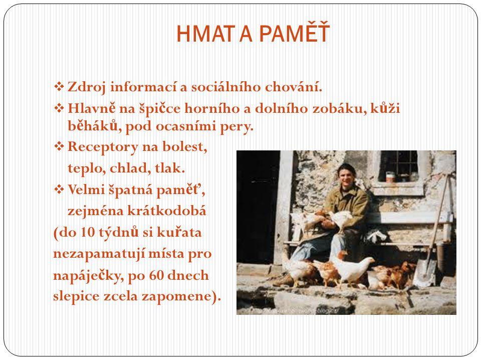 HMAT A PAMĚŤ  Zdroj informací a sociálního chování.