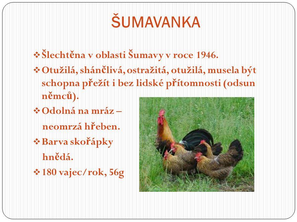 ŠUMAVANKA  Šlecht ě na v oblasti Šumavy v roce 1946.