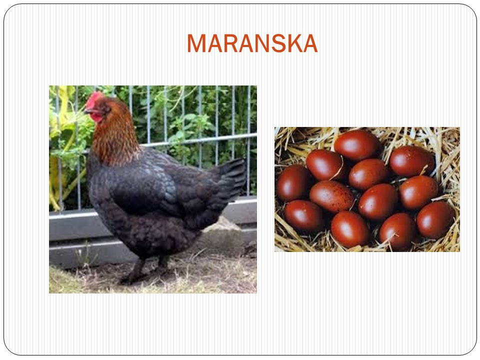 MARANSKA