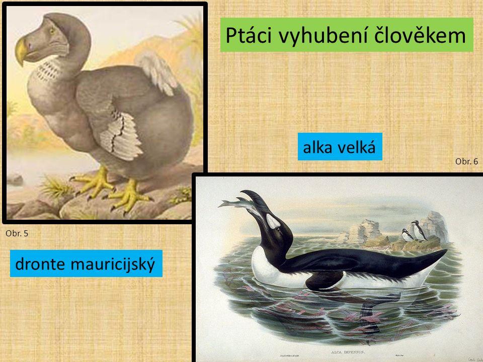 Obr. 5 Obr. 6 Ptáci vyhubení člověkem dronte mauricijský alka velká