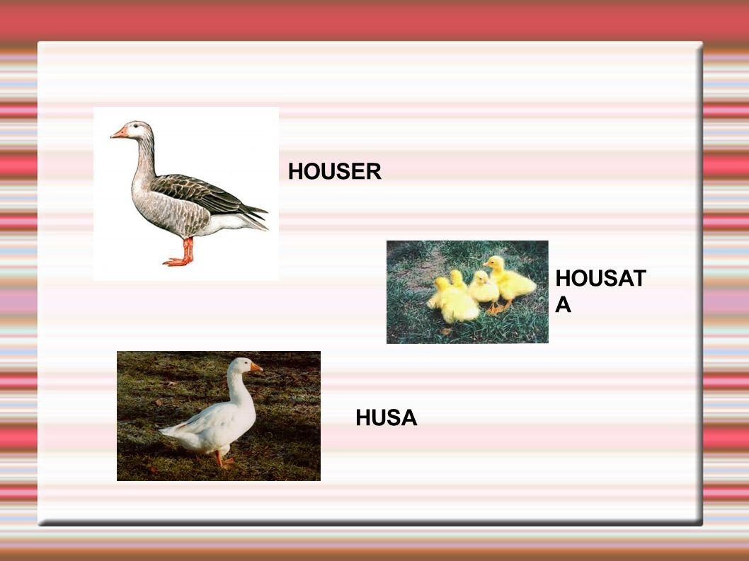 HOUSER HUSA HOUSAT A