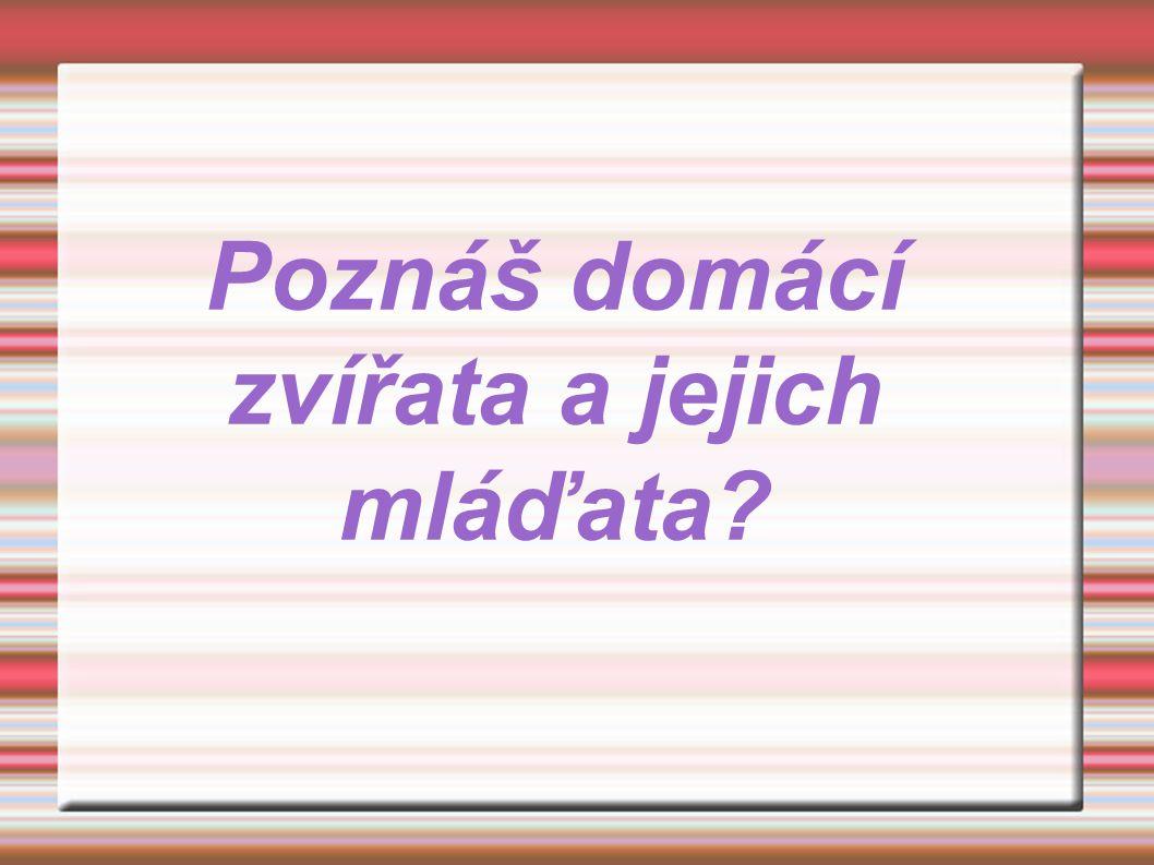 ● http://www.google.cz/imgres?imgurl=http://kisspanda.rajce.idnes.cz/ZOO_Olomouc_26.5.08/i mages/659_Kocka_divoka.JPG&imgrefurl=http://lvi-zirafy- orli.blog.cz/0903&usg=__QFQ0LCyIlyCKrH1M0wpPlVNyjSY=&h=700&w=525&sz=95&hl=cs& start=210&zoom=1&tbnid=SLQ_juO6QEDVwM:&tbnh=112&tbnw=84&prev=/images%3Fq%3 Dko%25C4%258Dka%26um%3D1%26hl%3Dcs%26rlz%3D1T4GUEA_csCZ390%26biw%3D 1260%26bih%3D518%26tbs%3Disch:10%2C3760&um=1&itbs=1&iact=hc&vpx=673&vpy=17 4&dur=4898&hovh=259&hovw=194&tx=134&ty=121&ei=Xmt2TOXkFpKBswbJ1ZD9BQ&oei= L2t2TKudIpXNjAeo8JnqBQ&esq=10&page=10&ndsp=24&ved=1t:429,r:20,s:210&biw=1260& bih=518 ● http://www.moje-kocka.cz/kote/vybirame-kotatko-aneb-jak-se-spravne-rozhodnout-79.html ● http://www.holubnik.com/?link=prispevky-ctenaru&menu=zvirata&prispevek=96 ● http://relax.lidovky.cz/byla-prvni-slepice-nebo-vejce-britsti-vedci-znaji-odpoved-pmi-/ln- zajimavosti.asp?c=A100715_140328_ln-zajimavosti_mtr ● http://www.google.cz/imgres?imgurl=http://www.faqs.org/photo- dict/photofiles/list/359/716hen.jpg&imgrefurl=http://www.faqs.org/photo-dict/phrase/359/hen.html&usg=__- zhg- Yh7tHcpdufdS8Gbtc8V7a4=&h=600&w=655&sz=97&hl=cs&start=0&zoom=1&tbnid=RwElTW3CgJyOEM: &tbnh=136&tbnw=167&prev=/images%3Fq%3Dslepice%26um%3D1%26hl%3Dcs%26gbv%3D2%26biw %3D1260%26bih%3D557%26tbs%3Disch:1&um=1&itbs=1&iact=rc&dur=265&ei=0212TO7sKsiQjAeR- 8jyBQ&oei=0212TO7sKsiQjAeR-8jyBQ&esq=1&page=1&ndsp=20&ved=1t:429,r:15,s:0&tx=101&ty=79